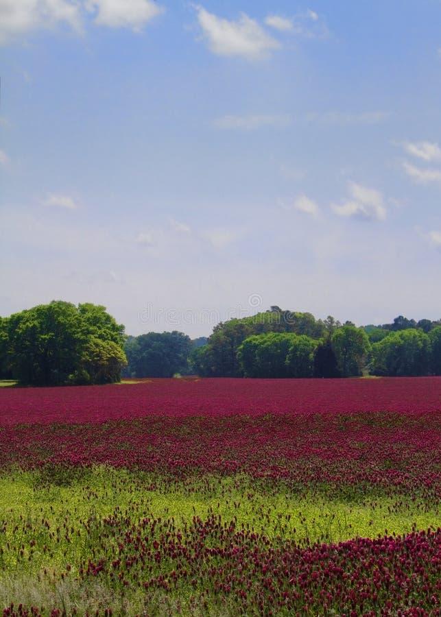 Het Landschap van de karmozijnrode Klaver royalty-vrije stock foto's