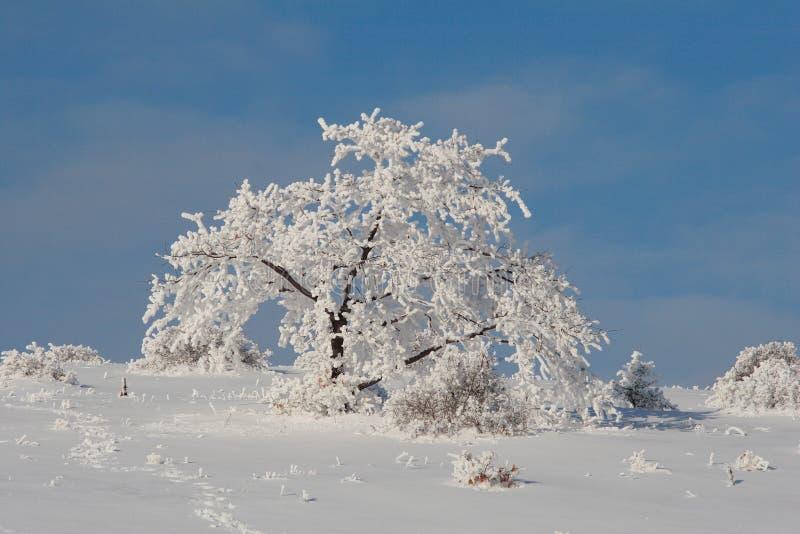 Het landschap van de Kerstmisboom van Frosen stock afbeelding