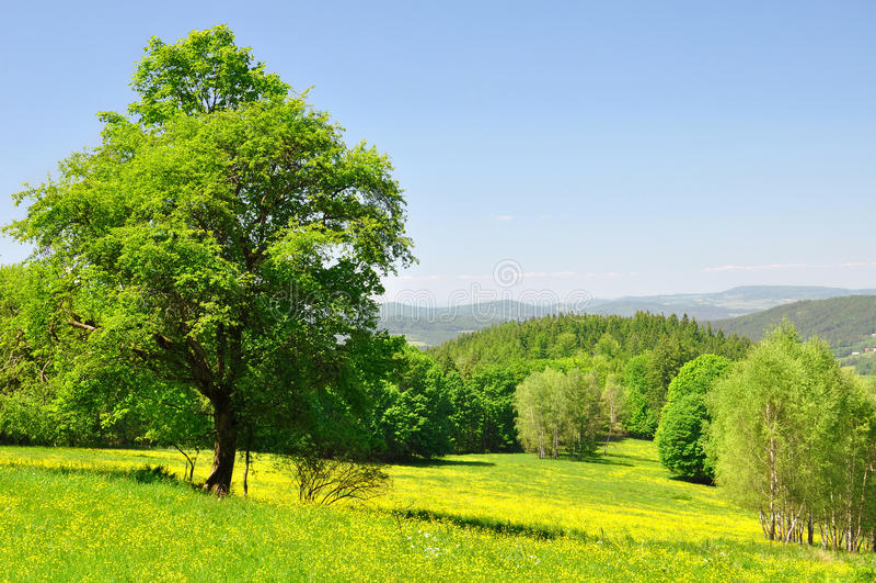 Het landschap van de lente royalty-vrije stock afbeeldingen