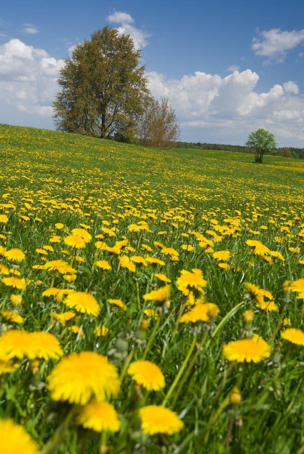 Het landschap van de lente. royalty-vrije stock foto