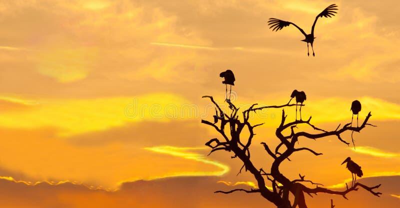 Download Het Landschap Van De Maribuooievaar Bij Zonsondergang Stock Foto - Afbeelding bestaande uit eenvoudig, warm: 107706522