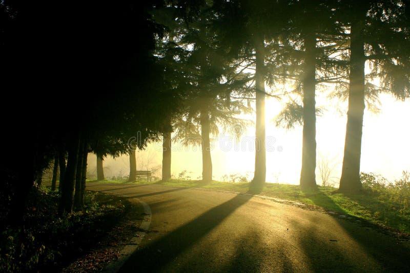 Het landschap van de mist stock afbeelding