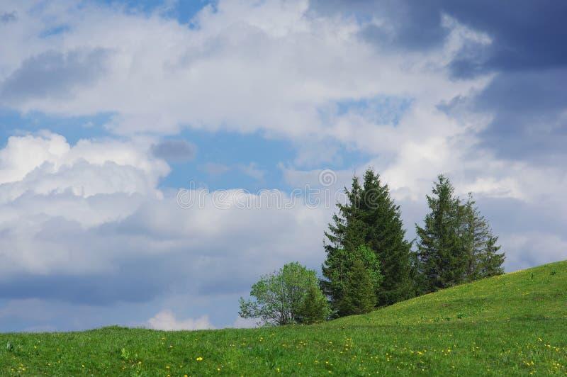 Het landschap van de pijnboomboom stock afbeelding