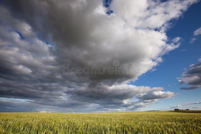 Het Landschap van de prairie stock afbeelding