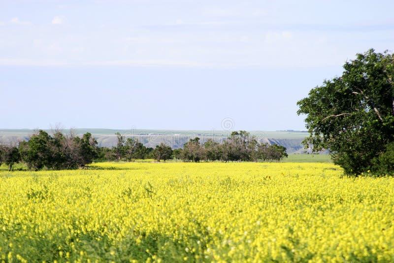 Het Landschap van de prairie royalty-vrije stock foto's
