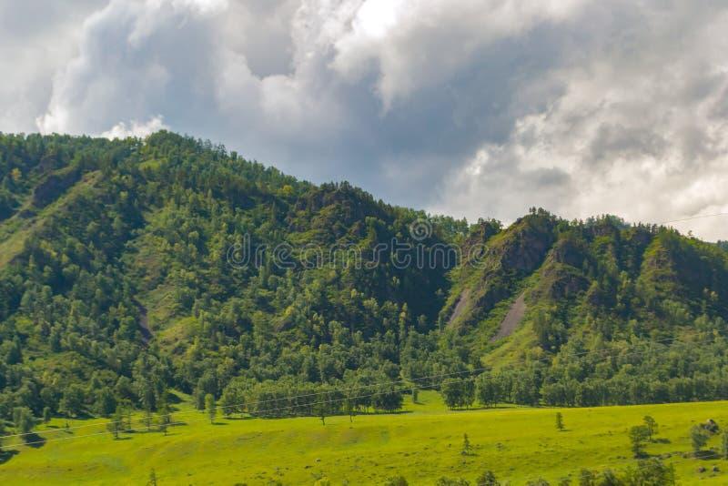 Het landschap van de rand behandelde met groene bomen en bekijkt valle royalty-vrije stock foto's