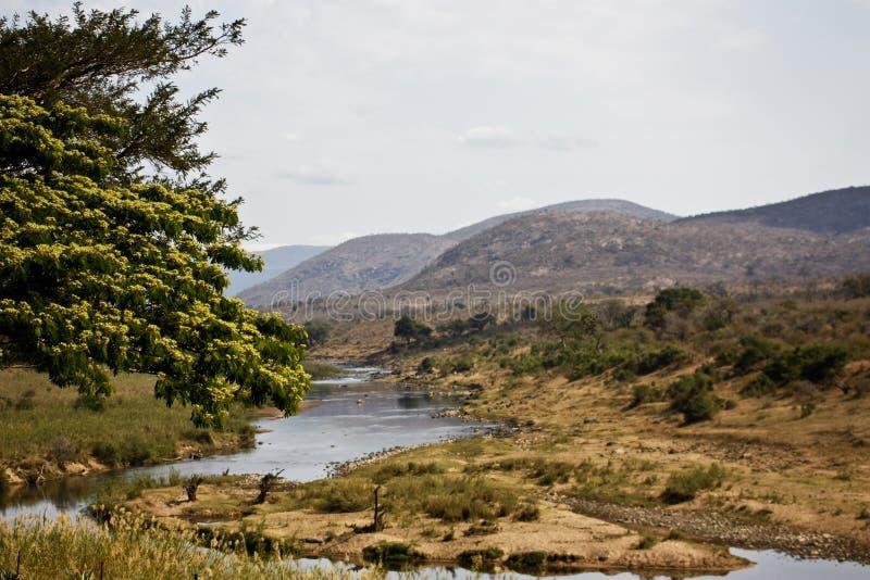 Het Landschap van de Rivier van de krokodil royalty-vrije stock afbeelding