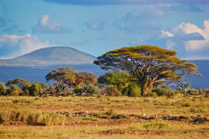 Het landschap van de savanne in Afrika, Amboseli, Kenia stock afbeeldingen