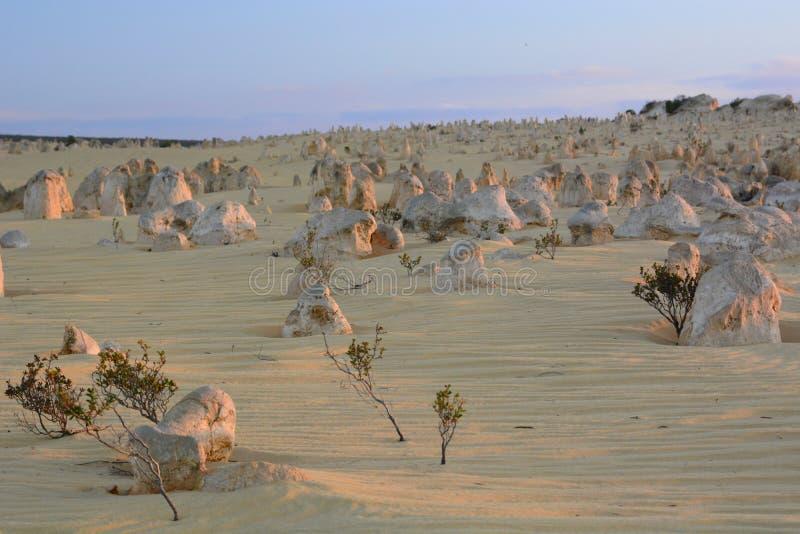 Het landschap van de toppenwoestijn bij zonsondergang Nambung Nationaal Park cervantes Westelijk Australië australië stock afbeeldingen