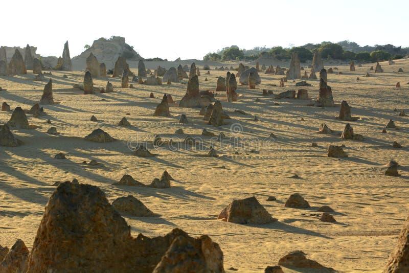 Het landschap van de toppenwoestijn bij zonsopgang Nambung Nationaal Park cervantes Westelijk Australië australië stock foto