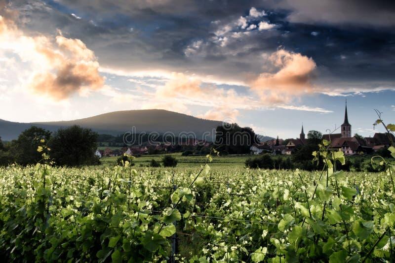 Het landschap van de wijngaard stock afbeeldingen