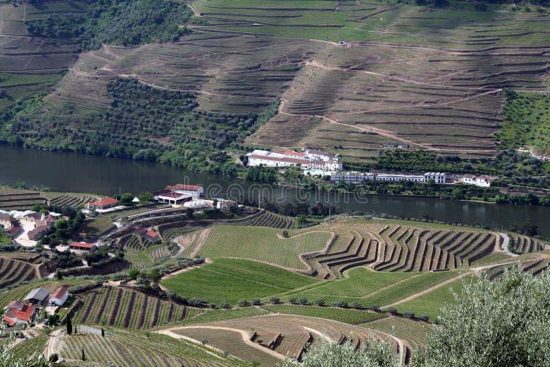 Het landschap van de wijnwijngaarden van de haven royalty-vrije stock afbeeldingen