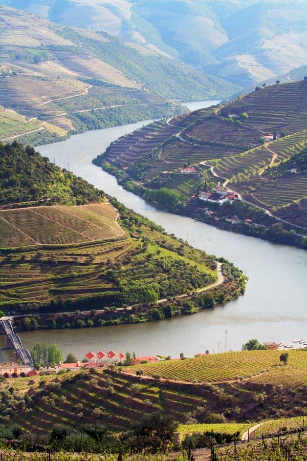 Het landschap van de wijnwijngaarden van de haven stock foto