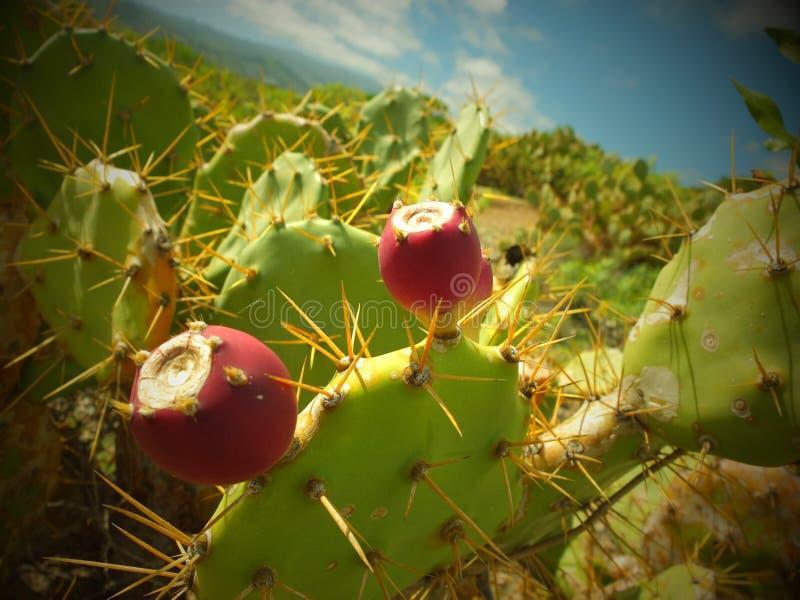 Het Landschap van de Wildwestcactus stock afbeelding