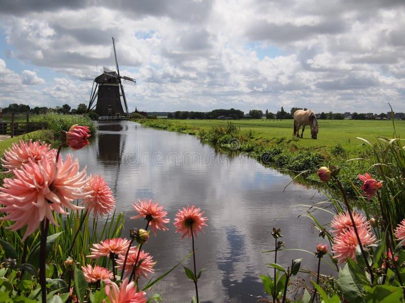 Het landschap van de windmolen in Holland stock afbeeldingen