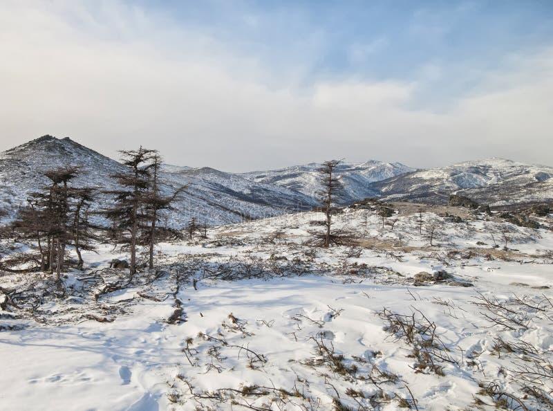 Het landschap van de winter stock fotografie
