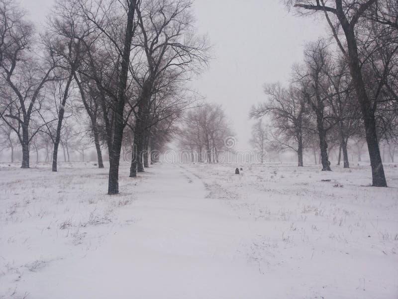 Het landschap van de winter Bomen onder de dekking van een de winterblizzard Achtergrond op een de winterthema stock afbeeldingen