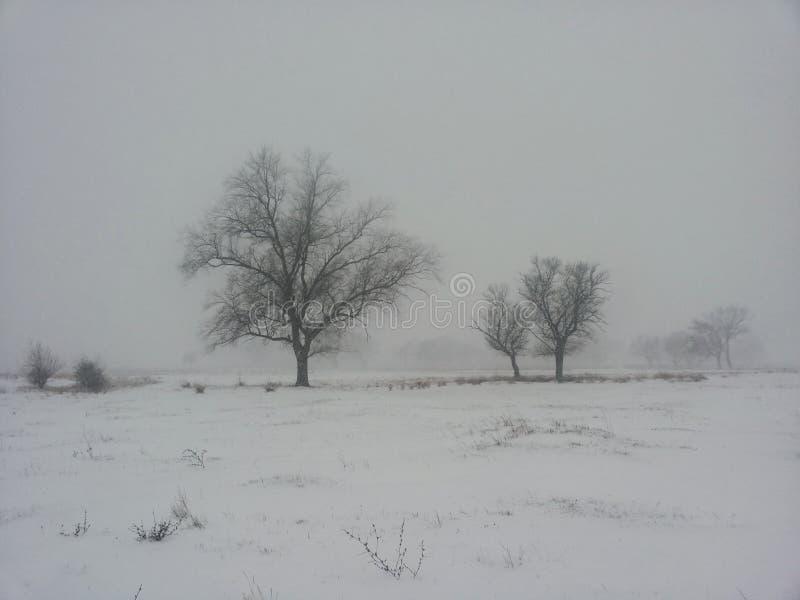 Het landschap van de winter Bomen onder de dekking van een de winterblizzard Achtergrond op een de winterthema stock foto's