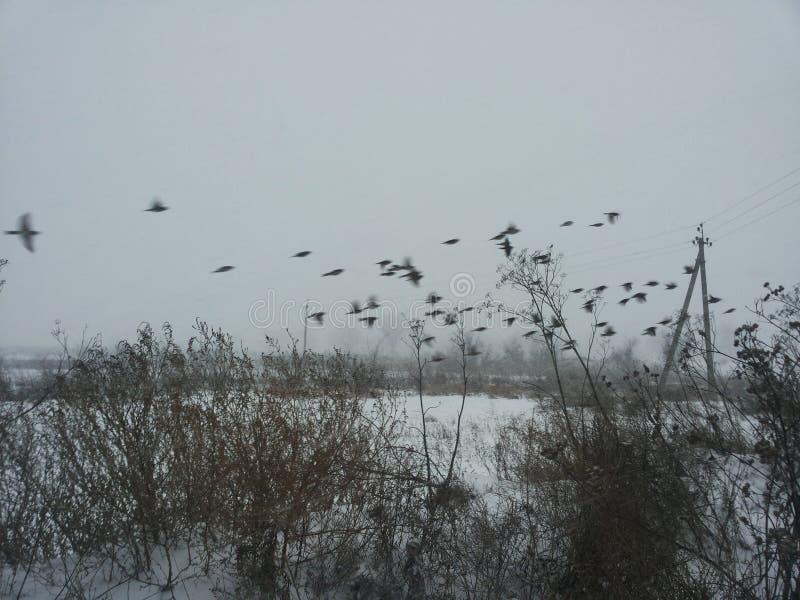 Het landschap van de winter Bomen onder de dekking van een de winterblizzard Achtergrond op een de winterthema royalty-vrije stock foto