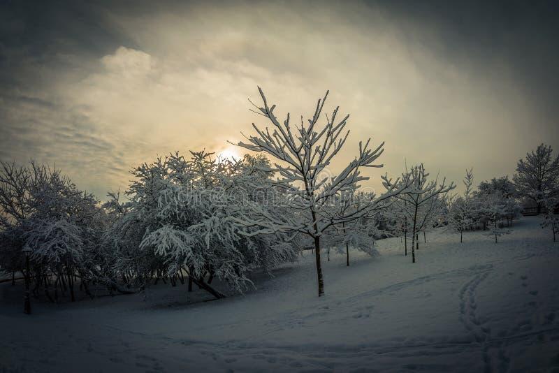 Het landschap van de winter bomen onder de sneeuw op een helling in de avond in bewolkt weer tegen de achtergrond van een dramati stock afbeeldingen