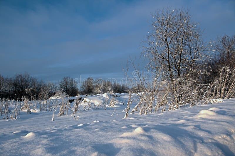 Download Het Landschap Van De Winter. De Scène Van De Winter Stock Afbeelding - Afbeelding bestaande uit winter, hout: 29514589