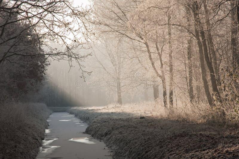 Het landschap van de winter in een bevroren bos stock foto
