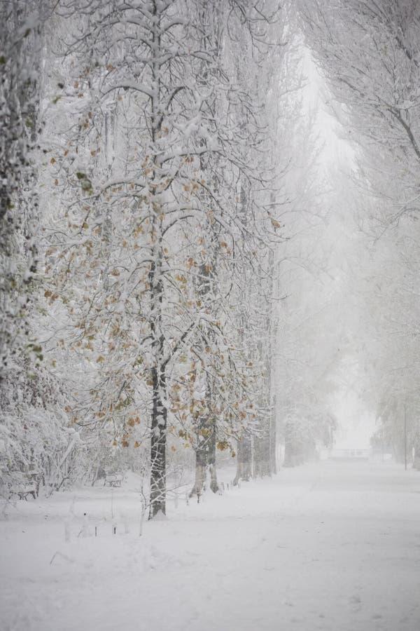 Het landschap van de winter in het park stock afbeeldingen