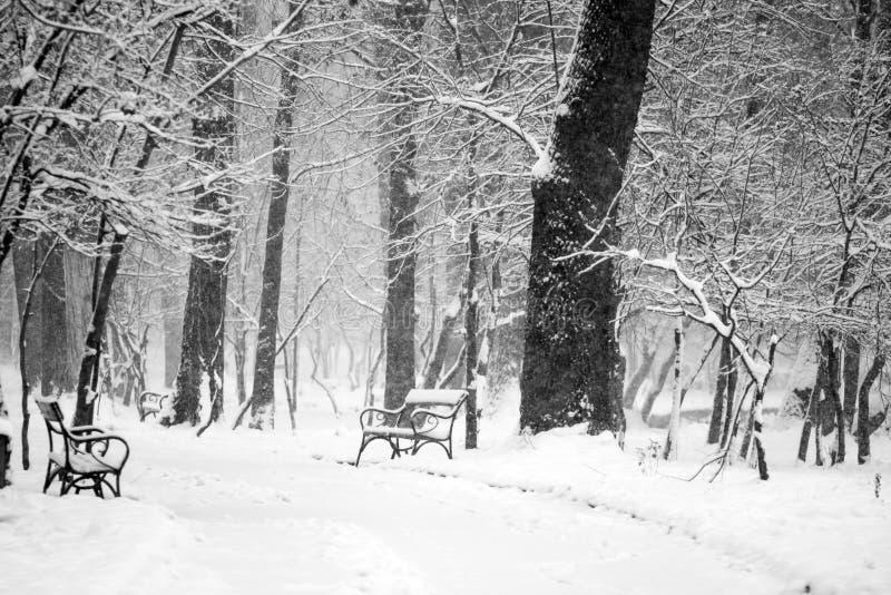 Het landschap van de winter in het park stock foto