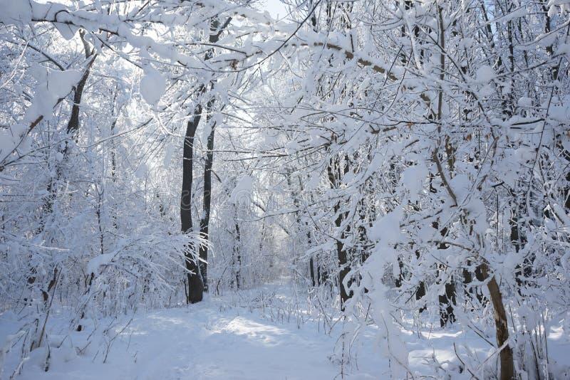 Het landschap van de winter in het park royalty-vrije stock fotografie