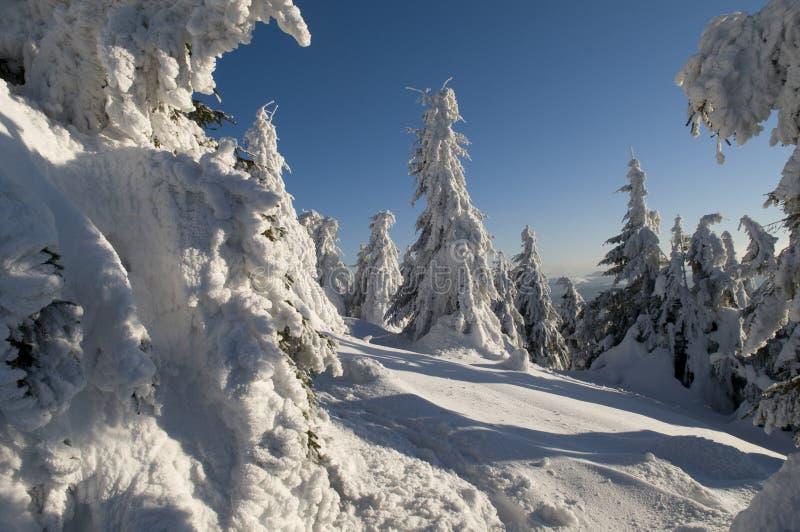 Het landschap van de winter in Karpatische bergen royalty-vrije stock afbeelding