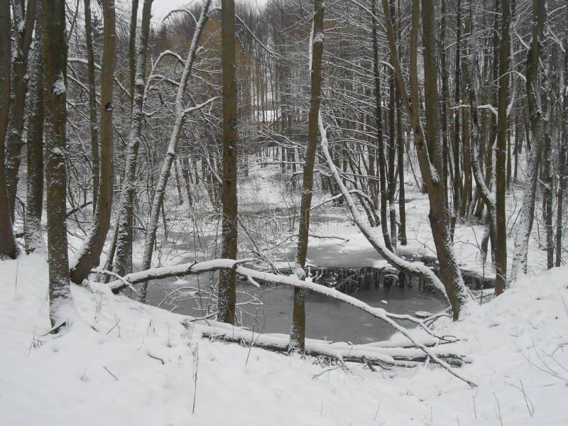 Het landschap van de winter met bomen stock foto's