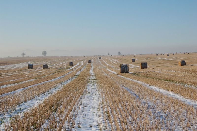 Het landschap van de winter met bundels royalty-vrije stock foto