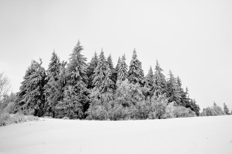 Het landschap van de winter met sneeuw in bergen stock afbeelding
