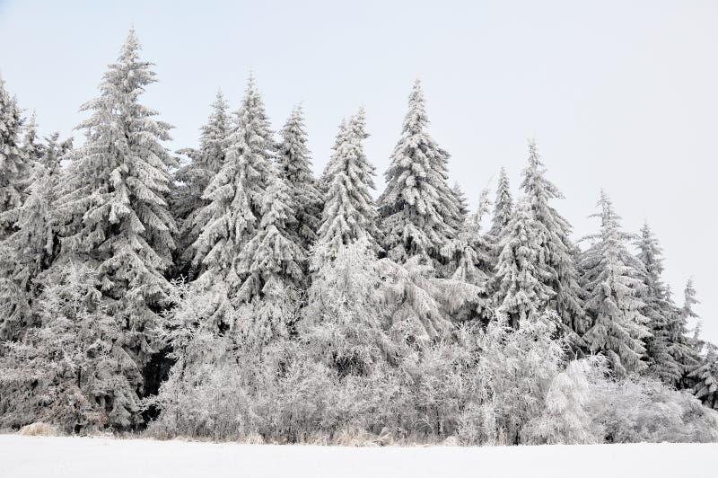 Het landschap van de winter met sneeuw in bergen stock fotografie