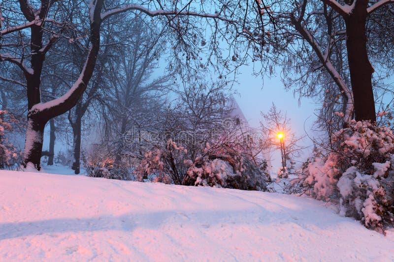 Het landschap van de winter met sneeuwbomen stock fotografie