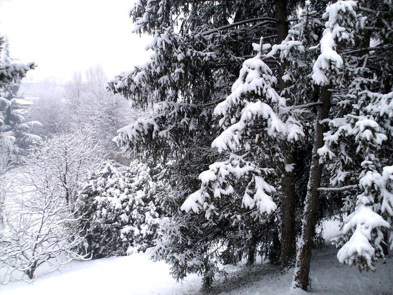 Het landschap van de winter met sneeuwbomen royalty-vrije stock afbeelding