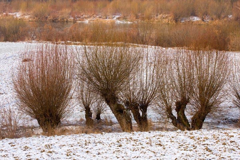Het landschap van de winter met wilgen. stock afbeeldingen