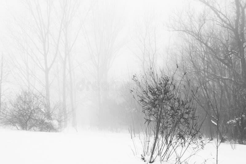 Het landschap van de winter in het park royalty-vrije stock afbeelding