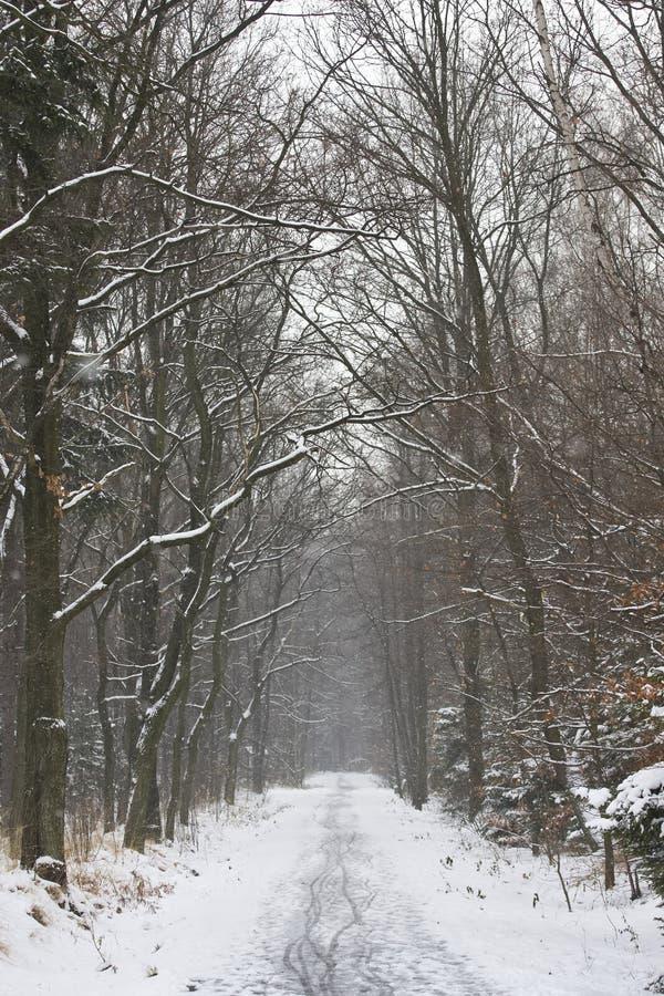 Het landschap van de winter in Polen stock foto's