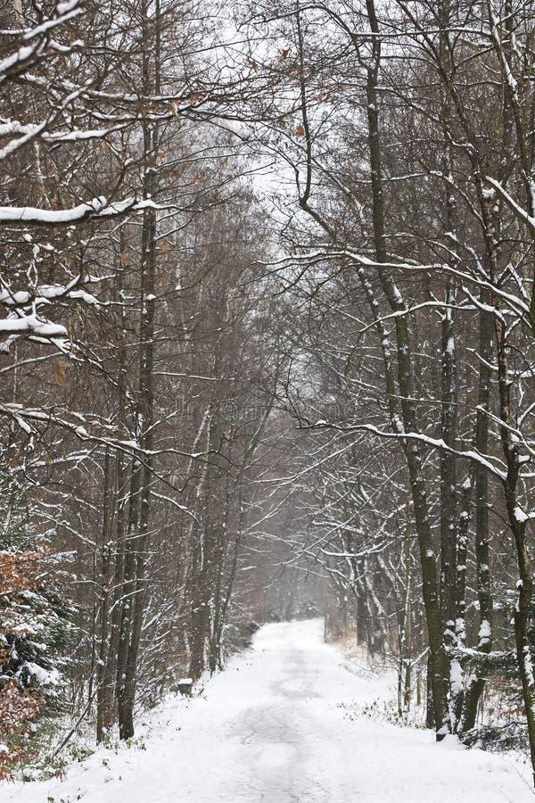 Het landschap van de winter in Polen royalty-vrije stock afbeelding