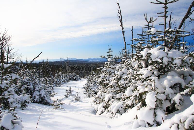 Het landschap van de winter, Quebec, Canada stock foto's