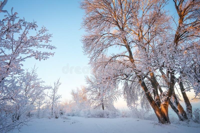 Het landschap van de winter Rijp op bomen stock afbeeldingen