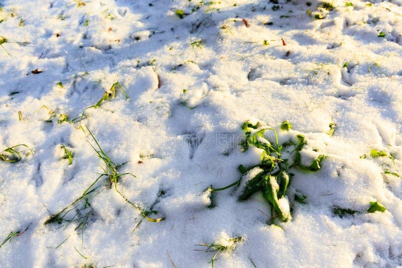 Het landschap van de winter Sluit omhoog van witte sneeuw Gebied met groene gras en sneeuw royalty-vrije stock fotografie