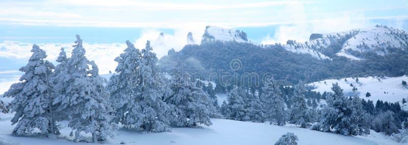 Het landschap van de winter van behandelde pijnbomen stock fotografie
