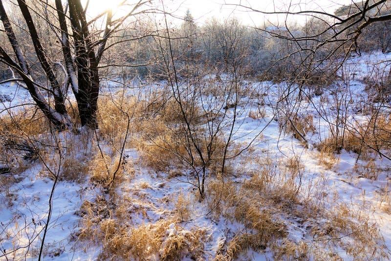 Het landschap van de winter De verse sneeuw ligt op het droge gras op een Zonnige dag De zon glanst van achter de bomen royalty-vrije stock foto