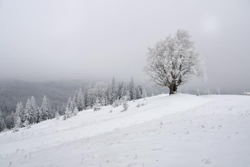 Het landschap van de de winterberg met eenzame beukboom stock afbeelding