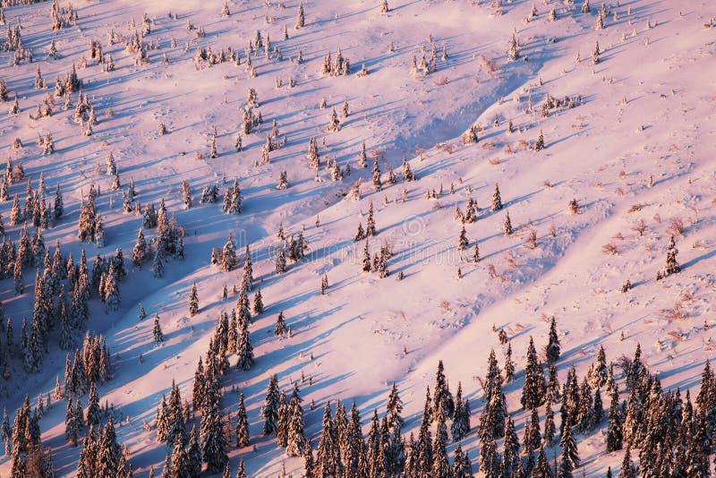 Het landschap van de de winterberg met mist in de Reuzebergen op de Poolse en Tsjechische grens - het Nationale Park van Karkonos stock foto's