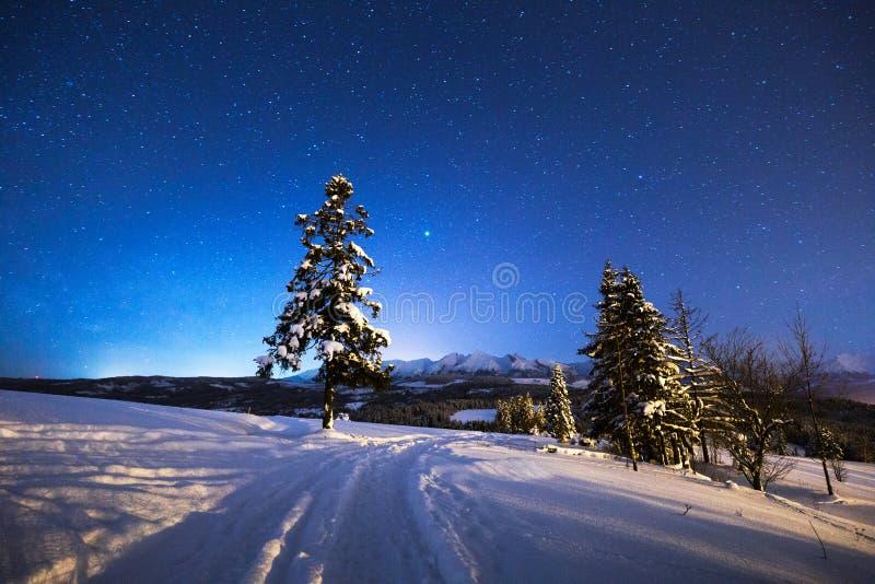 Het landschap van de de winternacht   stock afbeelding