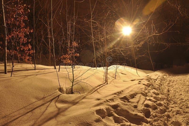 Het landschap van de de winternacht met bos met gele die bladeren, met zachte sneeuw en lichte stralen worden behandeld royalty-vrije stock afbeeldingen