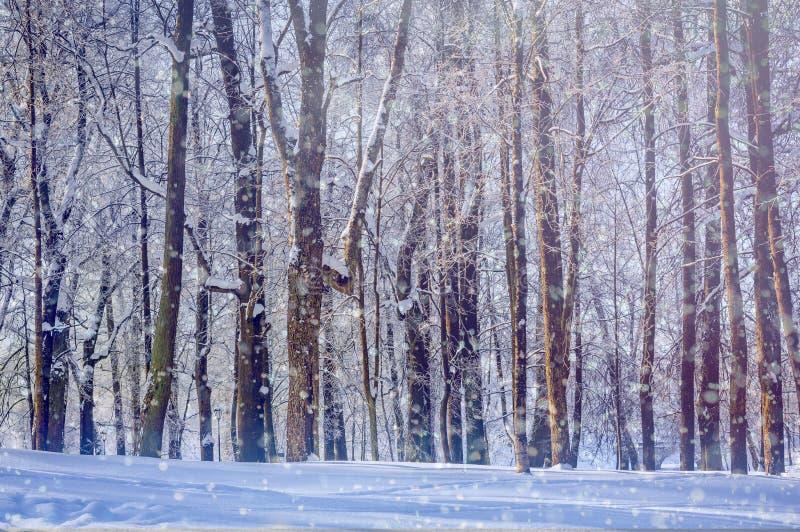 het landschap van het de winterpark Mooi landschap snowing nave stock foto's